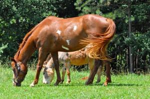 Serenbe Horse Farm